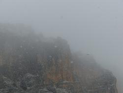 Buitre leonado volando en plena nevada. Refugio de Montejo. 16-11-2013. Francisco Jesús Fernández Herrera