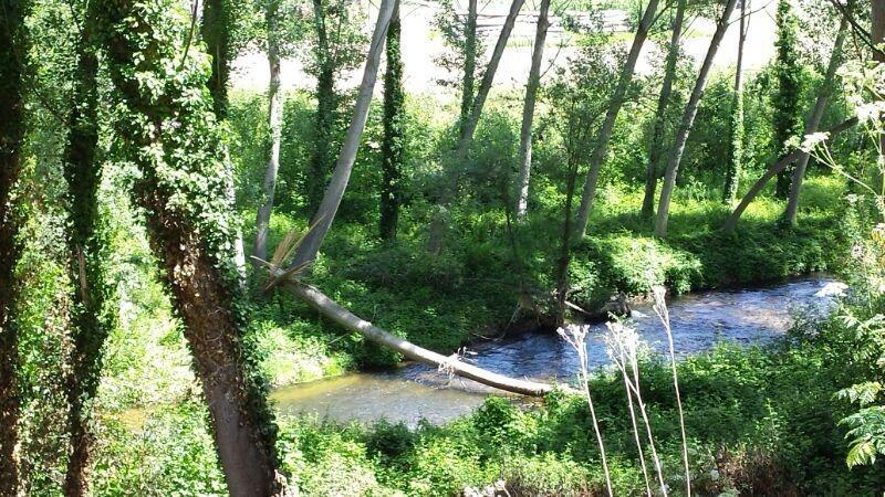 árboles caidos río Eresma 2