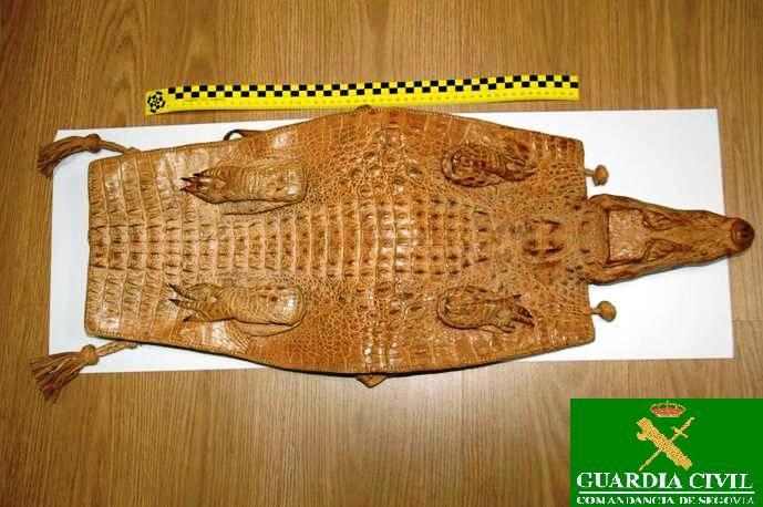 El Seprona de Segovia incauta una pitón real y un cocodrilo disecado