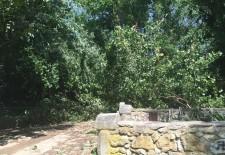 Herido un hombre en el Valle del Clamores por la caída de un árbol